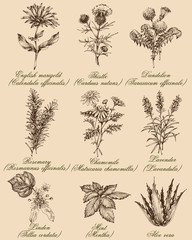 Flowers and herbs set. Medicinal plants and spices hand drawn