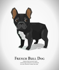 The french bull dog