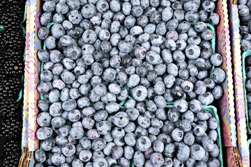 A large box of fresh organic blueberries at an outdoor farmers market in Seattle.