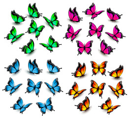 Collection of color butterflies. Vector