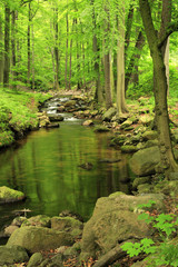 Small Rocky Stream flowing through Green Forest of Deciduous Trees