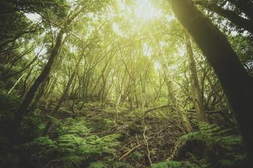 Bosque Tropical en la isla de Tenerife, Islas Canarias, España