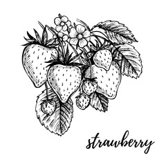 Hand drawn vector illustration - Strawberry. Sketch collection.