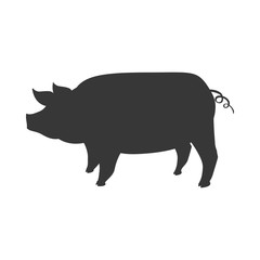 Pig animal farm pet character icon. Isolated and flat illustration. Vector graphic