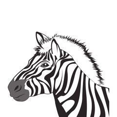 flat design zebra drawing icon vector illustration