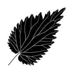black and white nettle leaf