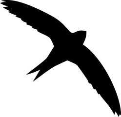 Silhouette of flying swift