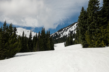 Alpine ski area on a cloudy day with tracks in the snow and evergreen trees
