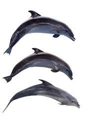 three grey isolated doplhins in jump