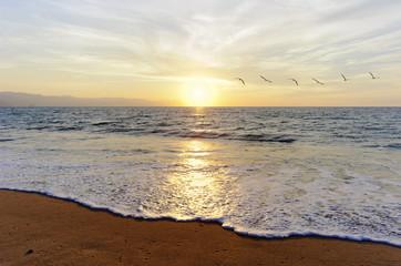 Birds Flying Ocean Sunset