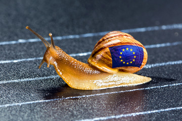 Snail under flag of Europe on sports track