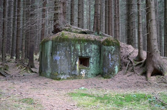 Old world war 2 bunker in forest with a tree growing on the roof