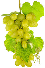 grappe de raisin blanc, fond blanc