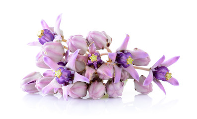 Crown flower on white background