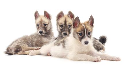 Three dogs.
