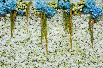white orchids flower  backdrop for wedding and event