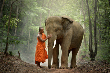 Monks and elephants. Wall mural