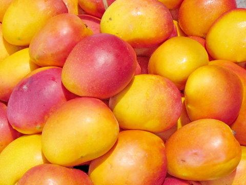 Tel Aviv beautiful mango 2012
