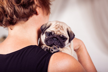 Charming pug puppy sitting at the shoulder of owner and looking at the camera. Horizontal.