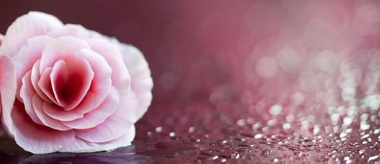 Beautiful pink flower website banner