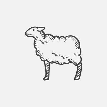Sheep sketch icon.