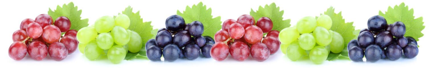 Trauben Weintrauben Früchte Frucht Obst in einer Reihe Freistel Fototapete