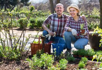 Senior couple working in the garden.
