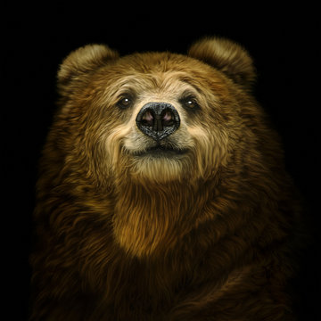 Smiling bear on a black background
