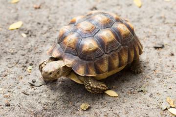 Turtle on the wild safari park.