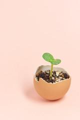 発芽 エコロジー