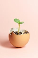 ヒマワリ 発芽 卵の殻