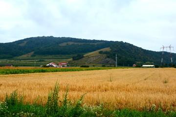 Grain culture in a village in Transylvania