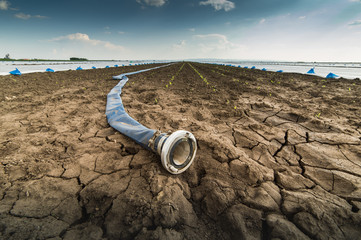 Dry land - drought - and hose for watering