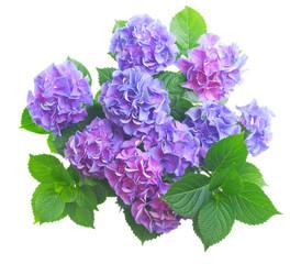 Fond de hotte en verre imprimé Hortensia blue and violet hortensia flowers