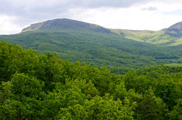 Landscape of green trees over mountains
