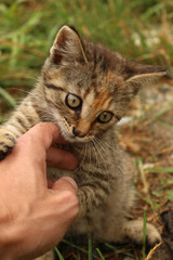playing cute small kitty