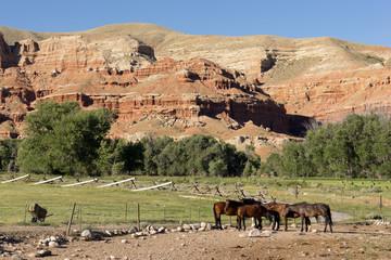 Corraled Horses Wyoming Badlands Ranch Livestock Animals