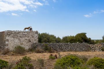 Dog on the roof of ancient stone house