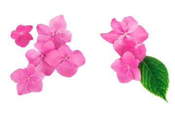 Pink flowers with green leaf  creative natural  pattern background. Flat lay.