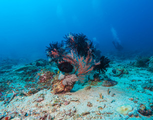 Colorful Tropical Coral Reef with Sea Lilies