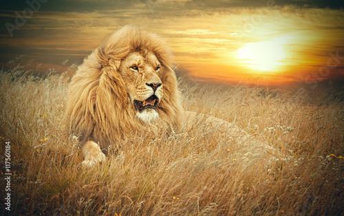 лев на закате без смс