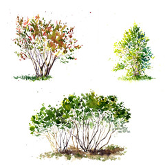 watercolor green bushes