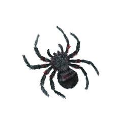 watercolor cartoon spider