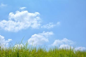 青空と緑の草
