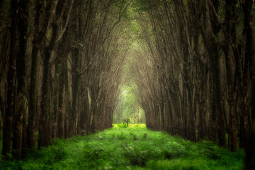 Blurry image of imaginary tree tunnel