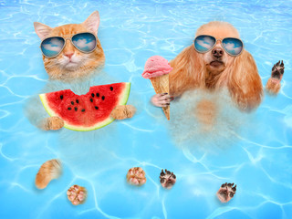 Cat and dog wearing sunglasses relaxing in the sea . Red cat eats watermelon and dog eats ice cream.