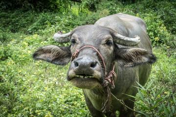 Closeup image of Buffalo