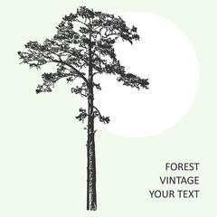 Vintage forest tree design template. Vector illustration