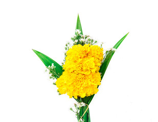 Marigold flower, Offering fresh flowers, Buddha, white background