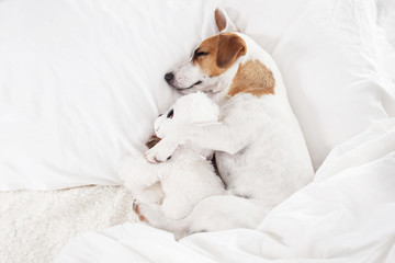 Sleeping dog at bed